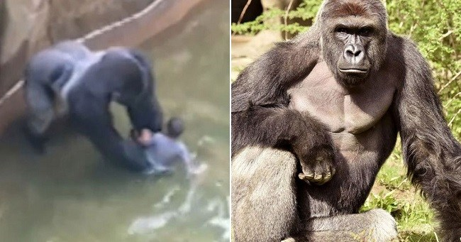 harsh reality of zoos
