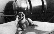 3-11-1957. Il viaggio di Laika verso le stelle (di Nardo Marino)