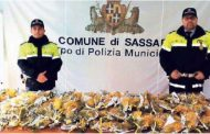 Cornacchia news: all'otto m'arzo... (di Alba Rosa Galleri)