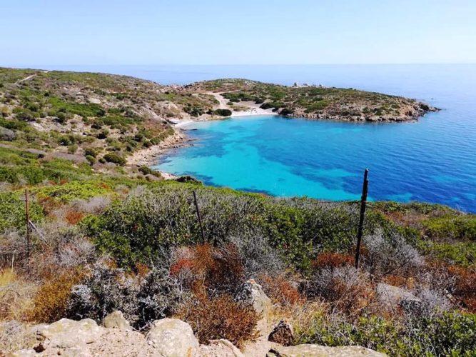 Cronache dall'Asinara  (di Angela Collazuol)