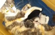 L'accoglienza di mamma gatta (di Francesco Giorgioni)