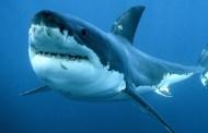 Presepio con squalo (di Cosimo Filigheddu)