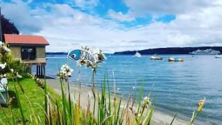 Sardine Of Marseille, Quemchi, Chili