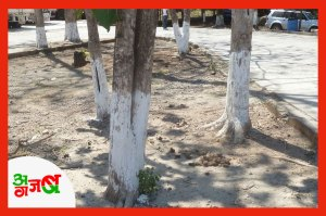 painting-tree-trunks-white2