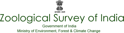 Zoological Survey of India SRF, JRF, Computer Operator Interview Based Govt Job