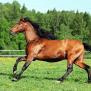 Sarstart For Horses Yucca Based Joint Supplement For