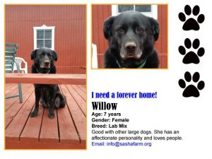 need-home-willow