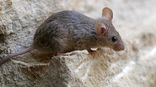 Residents Reminded to Protect Themselves Against Hantavirus   News ...