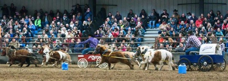 Events – Saskatchewan Equine Expo