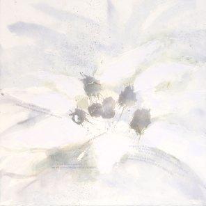 EDELWEISS   EDELVAIS   Leontopodium alpinum