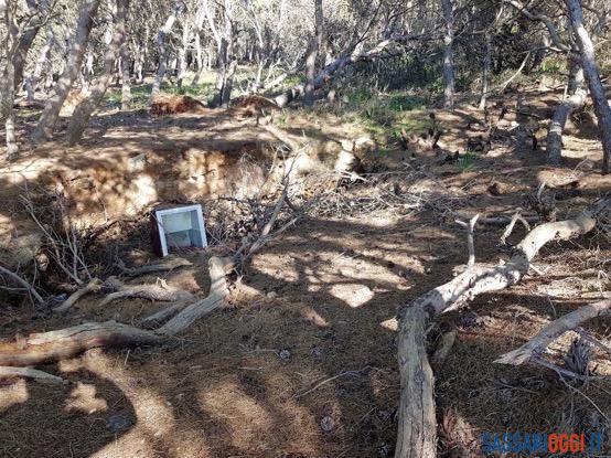 Pini spezzati e rovesciati, il dossier degli ambientalisti su Punta Giglio