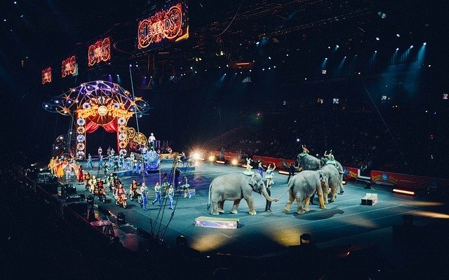 Circo con animali Sassari