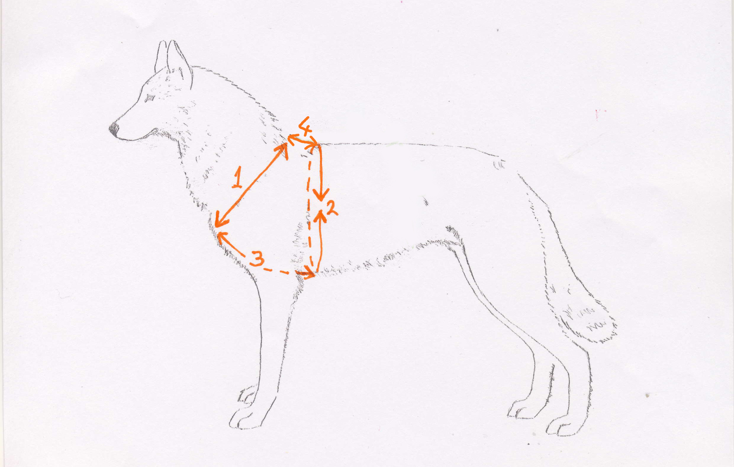 Tracking Walking Harness Sass Dog Equipment