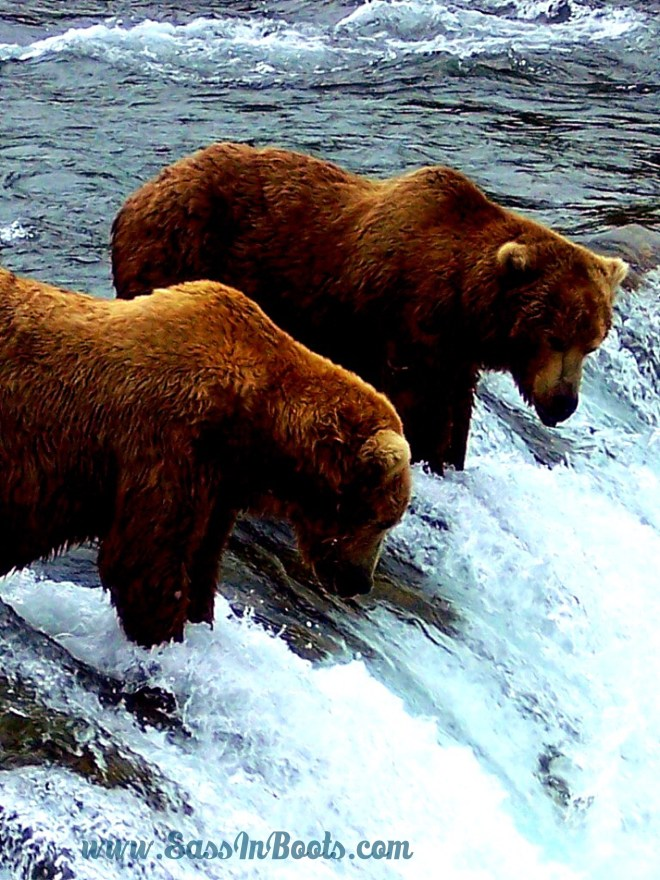 Bears at Brooks Falls Katmai National Park Alaska