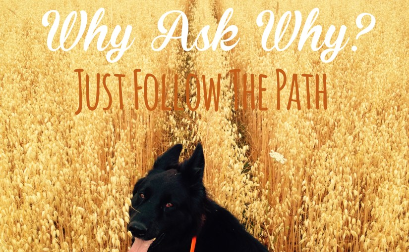 Why Ask Why? Just Follow The Path