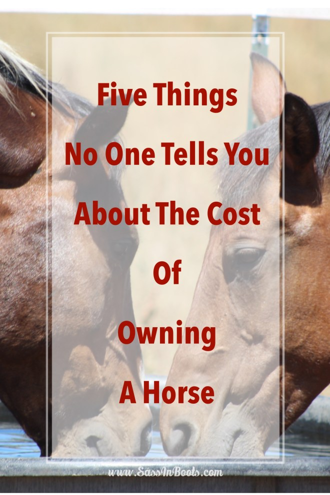 Five things no one tells you about the cost of owning a horse and hidden costs