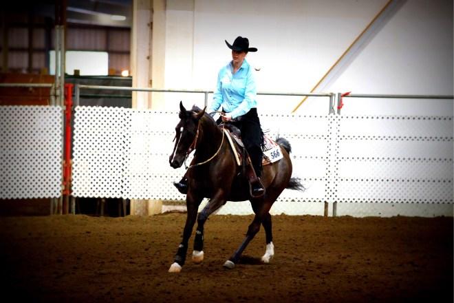 Half Arabian Reining Horse Western