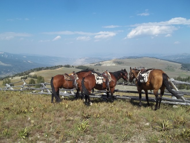 Horses On Bacon Ridge Wyoming