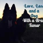 Love, Loss, and a Dog With A Brain Tumor