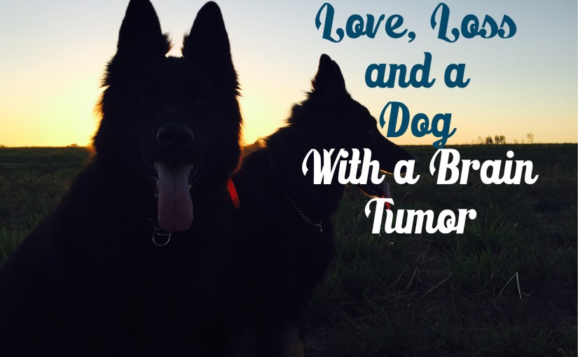 Love Loss & A Dog with A Brain Tumor