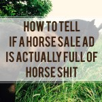 How To Tell If A Horse Sale Ad Is Actually Full Of Horse Shit