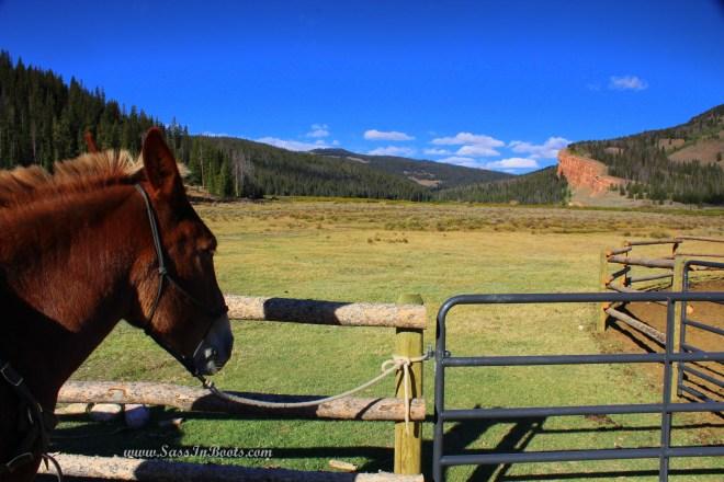 pack-mule