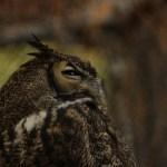 owl-be-watching