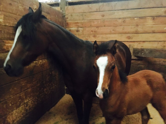 Horse Family Mare & Foal