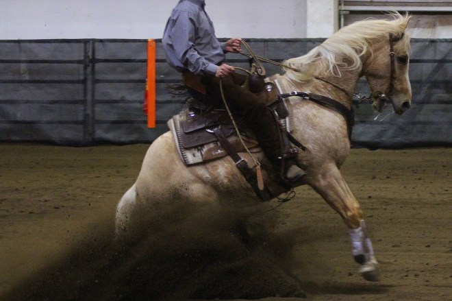 Palomino Reining Horse Sliding Stop
