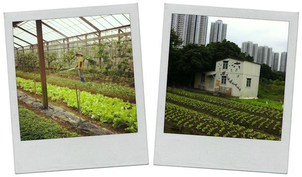 Top 5 Organic Farms in Hong Kong - Sassy Hong Kong
