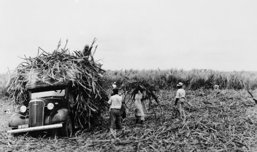Barbados Sugar Cane Industry