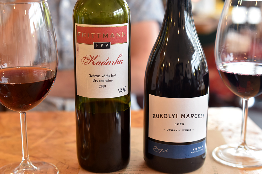 main-wines-reds-Turul-Project-team-©Sated-Online