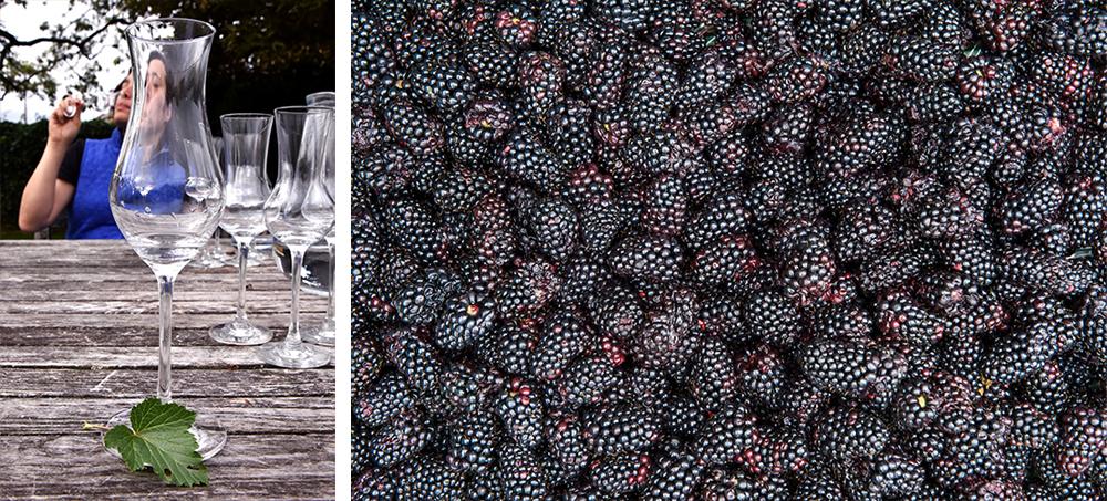 Capreolus Distillery blackcurrant eau de vie ©SatedOnline