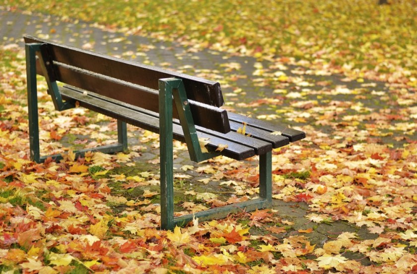 Bench and leaves, Germany