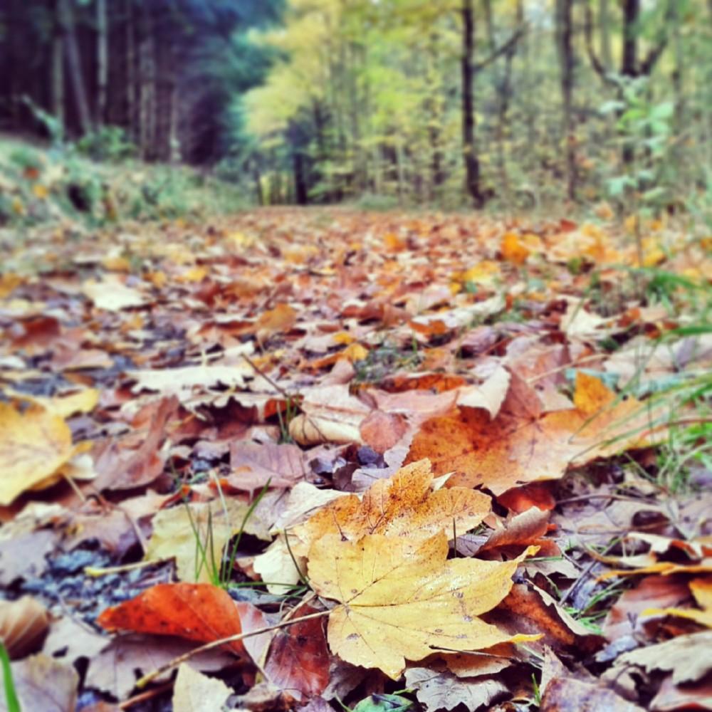 Fall, Germany