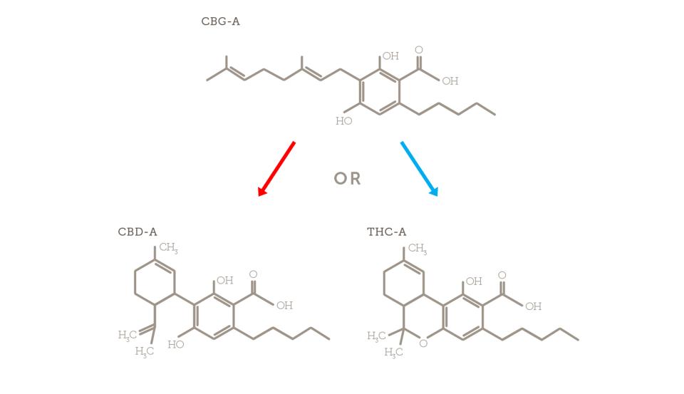 Decarboxylation of Cannabidiol (CBD) Using the Ardent