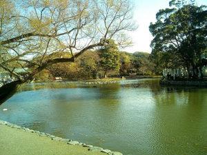 鶴岡八幡宮(旗上弁財天社)の池