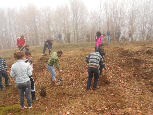 """OT-PDL a plantat copaci în cadrul actiunii """"Natura înseamnă viaţă"""""""