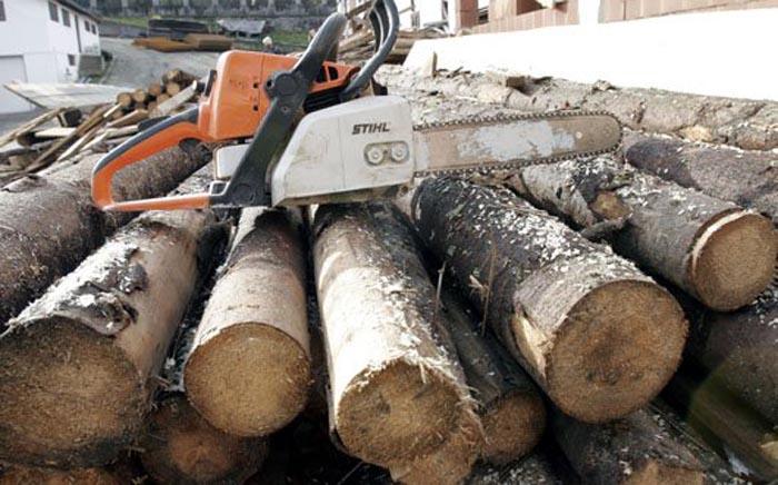 Prinși la furat de lemne