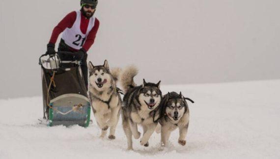 Un careian pe podium la un concurs internațional de atelaje canine