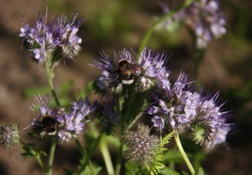 kukkiajamehilaisia