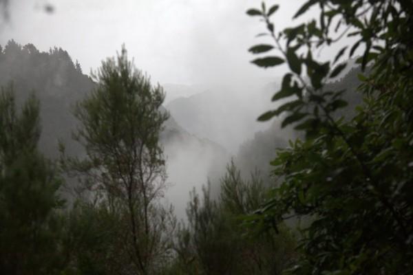 Madeira 2013_ torstain patikka laurisilva 074 (Custom)