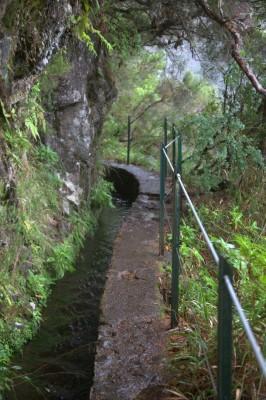 Madeira 2013_ torstain patikka laurisilva 096 (Custom)