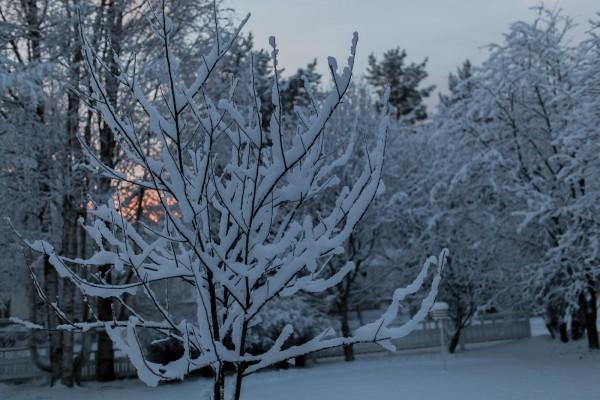 Kotipihan lumimaisemia-2