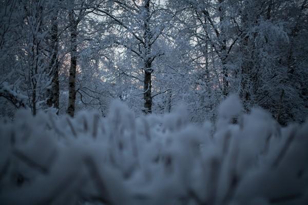 Kotipihan lumimaisemia-6