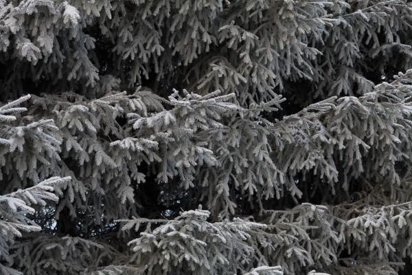 Pitsipuut-2