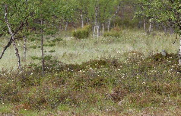 Patikka Luulammelle 2014-13