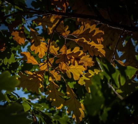 keltaiset lehdet-7
