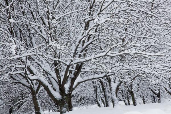Pihlajanmarjat ja lumi_