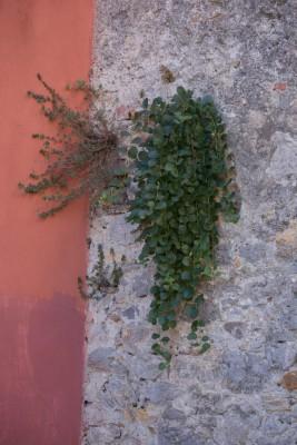 Liguriauntitled-9